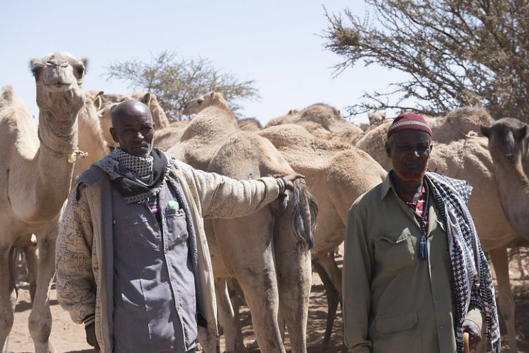 2 Somali men and their camels