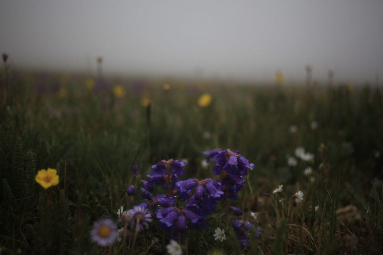 purple flowers in the field