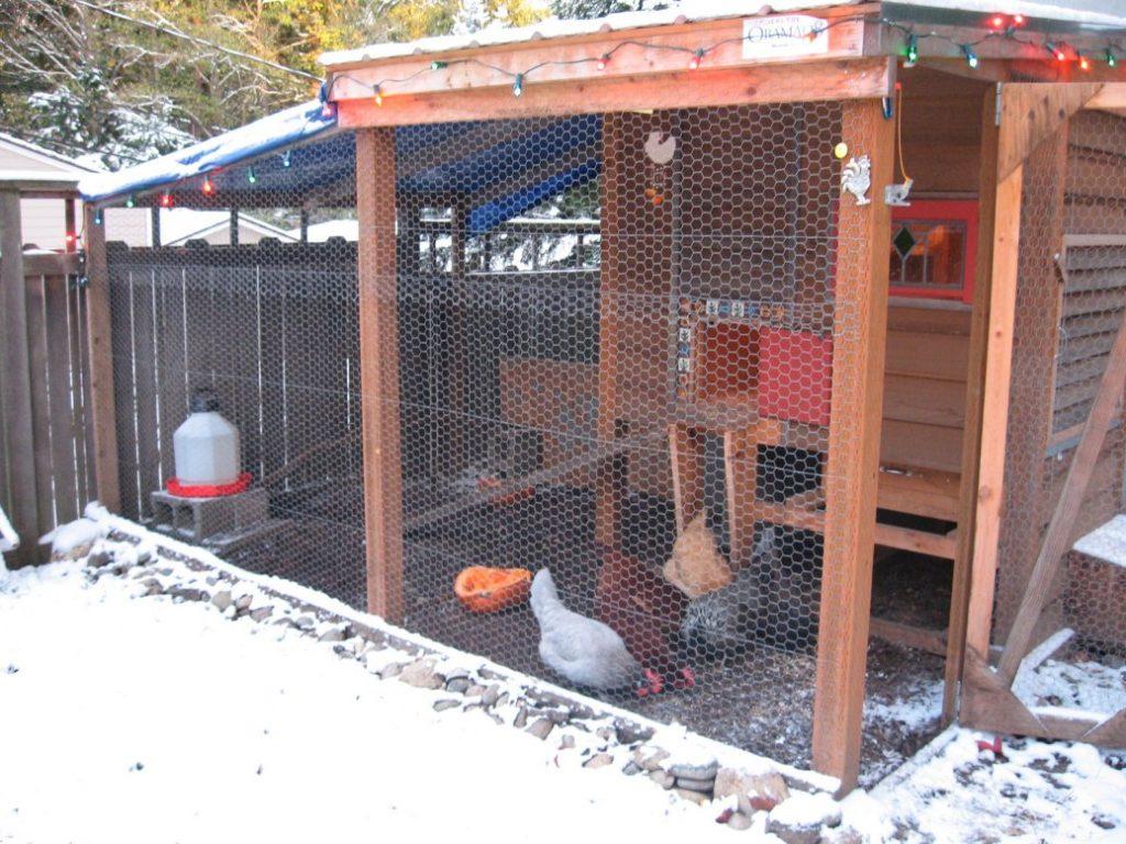 snowy chicken coop