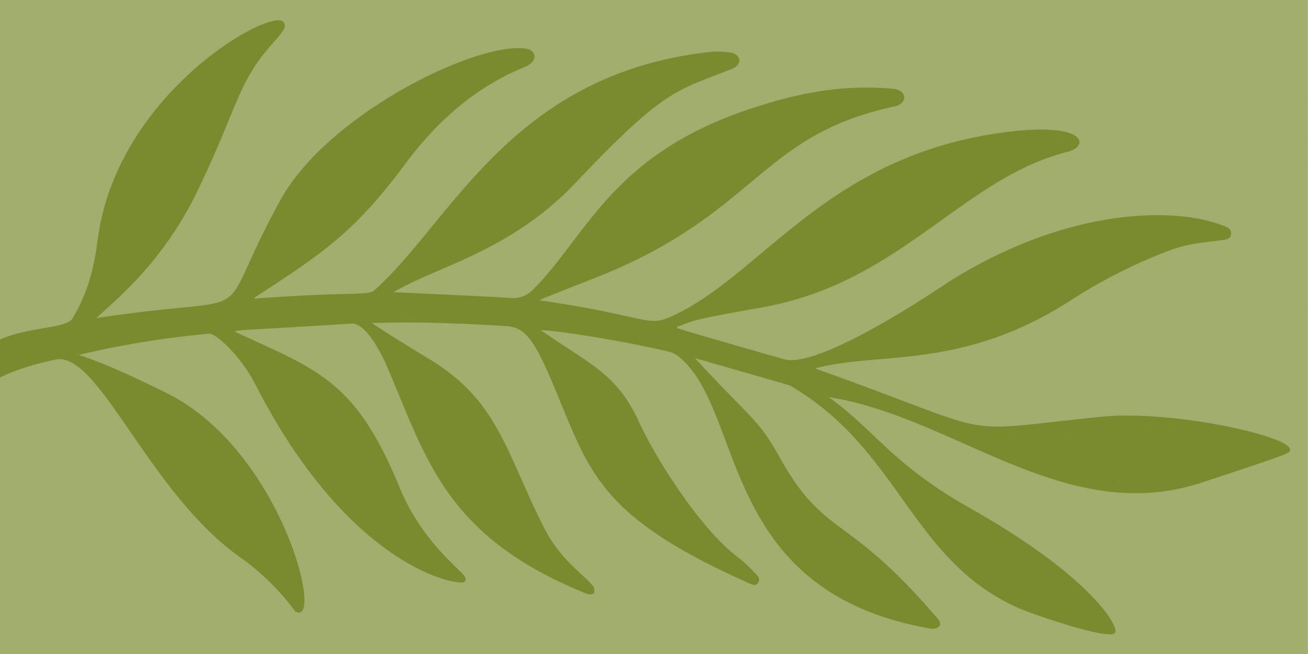 EthnoMed Leaf Graphic